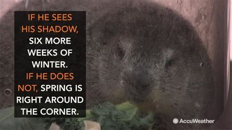 groundhog day weather report groundhog day 2017 predictions will punxsutawney phil see