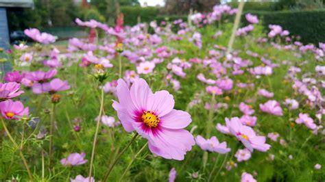 royal botanical garden edinburgh royal botanic garden edinburgh last days of summer