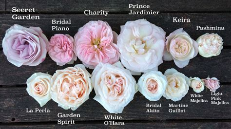 study of flower colours in the garden image gallery names of pink roses