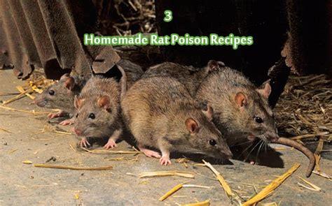 rat killer rat poison related keywords rat poison keywords keywordsking