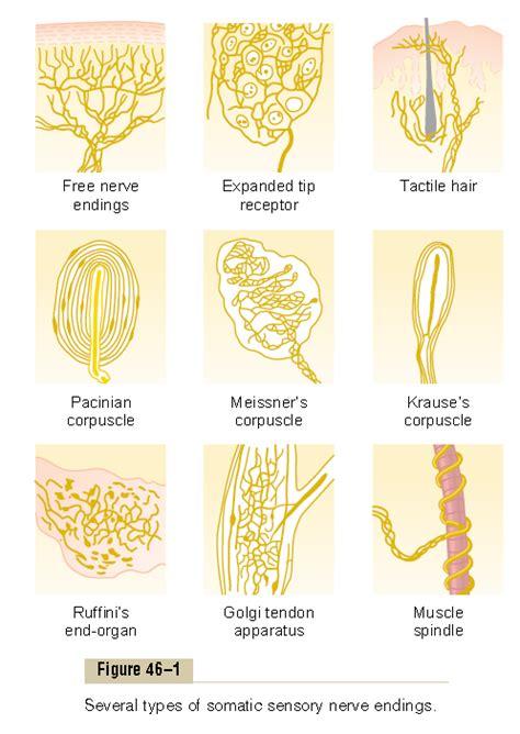 U Nyeri Otot Sendi Av Mbj pendidikan macam jenis reseptor sensorik tubuh