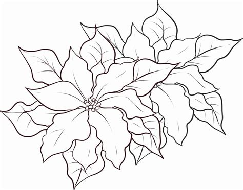 poinsettia coloring page pdf poinsettia coloring page coloring home