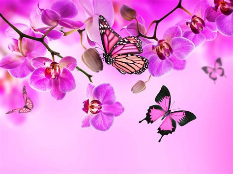 Farbe Orchidee by Orchid Butterflies Pink Color Flowers Wallpaper