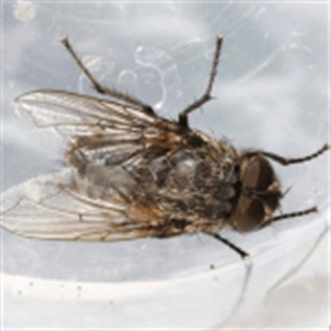 how to get rid of flies outside the house how to get rid of gnats outside how to get rid of stuff
