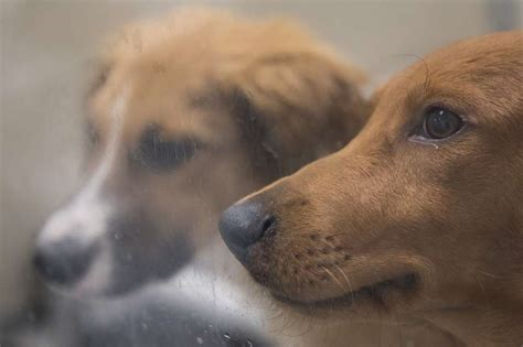 seattle humane dogs pups find new home at seattle humane