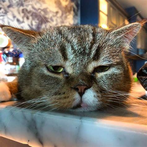 Sho Kucing Di Malaysia foto tuah seekor bujibu kucing paling di