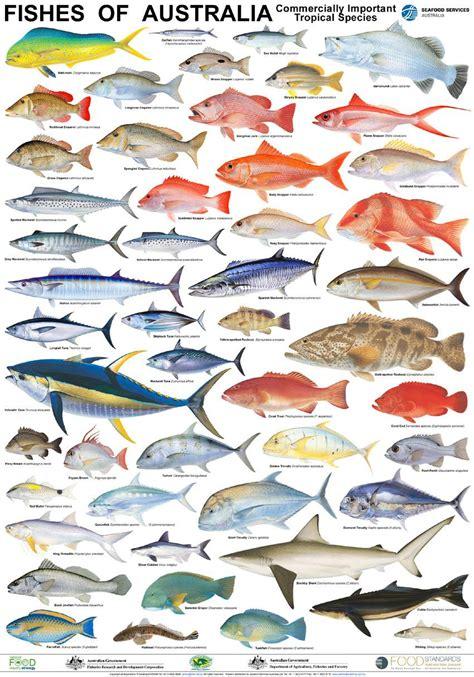 printable fish poster seafood posters mfma