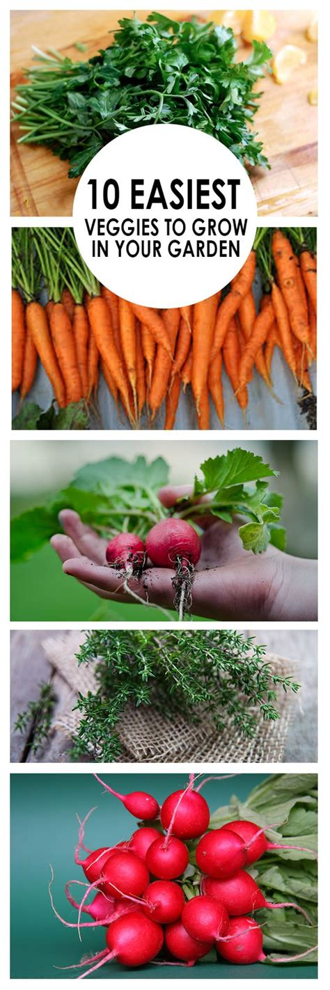 10 Easiest Veggies To Grow In Your Garden Gardening Easy Garden Vegetables