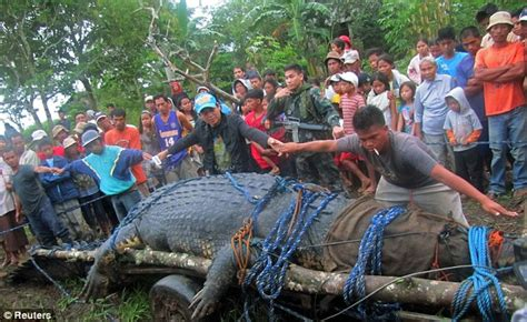 Worlds biggest Crocodile crowned from Philiphine