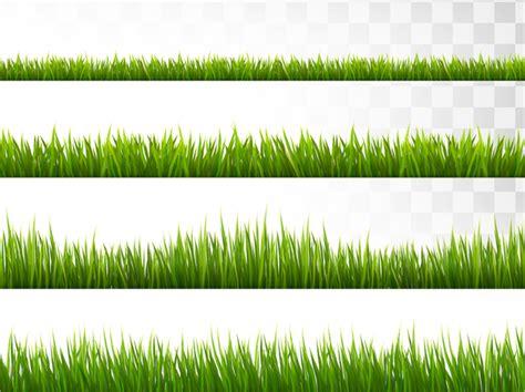 gras pattern ai 15 grass vectors free psd ai eps format download