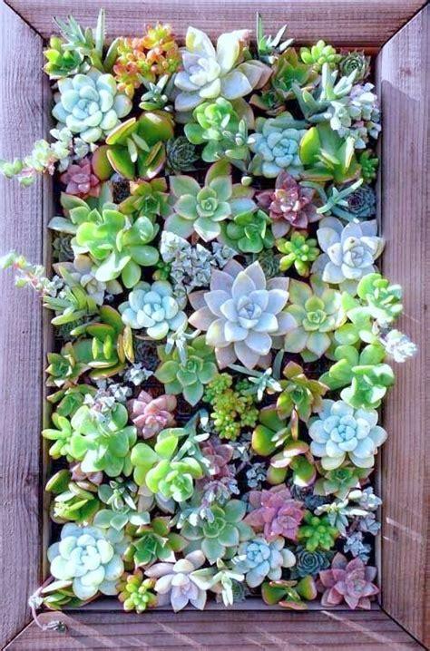 Succulent Wall Planter Best 25 Succulent Wall Gardens Succulent Wall Garden For Sale