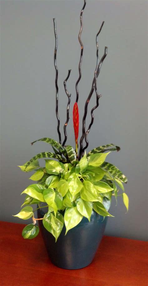 home san diego interior plants