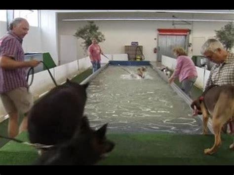 Patung Anjing Golden Retriever 3 by Anjing Berenang Dengan Ikan Hiu Doovi