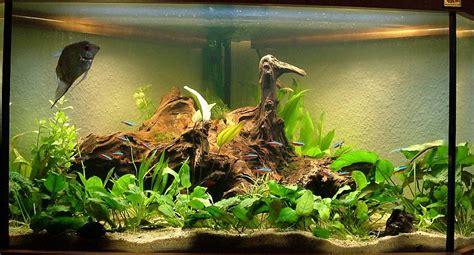 Aquarium Mit Wurzeln Einrichten 6735 by Braunes Wasser Durch Wurzel Wie Lange Beleuchten