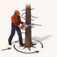 Gergaji Mesin Penebang Pohon rental mesin 7 sewa gergaji pohon