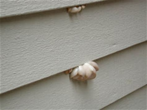 mold on side of house living on earth june 18 2004