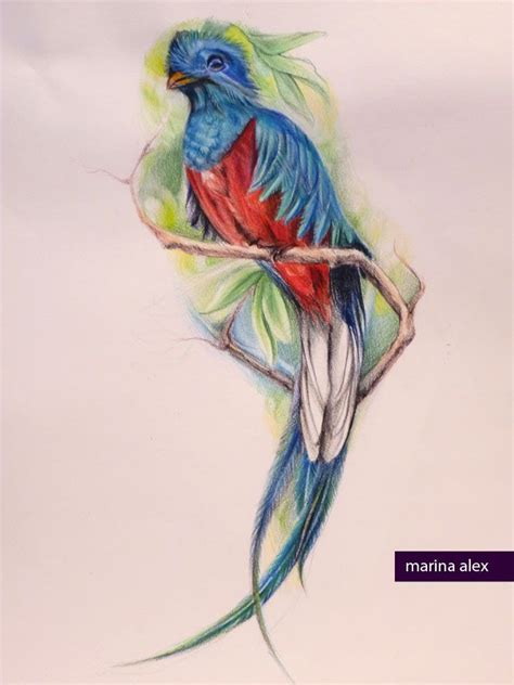 watercolor quetzal tattoo quetzal tat image bird butterfly images and tattoos