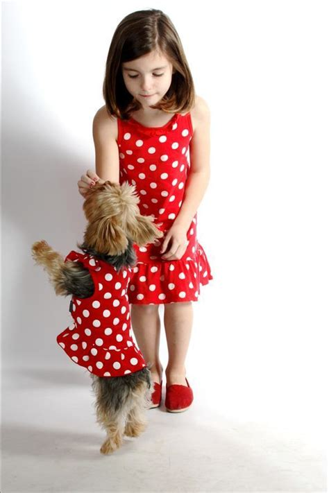 yorkies inc yorkies images and yorkie modeling their polka dot dresses hd wallpaper