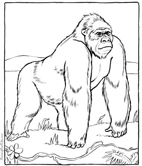 coloring page for gorilla dibujo de gorila coloring pages