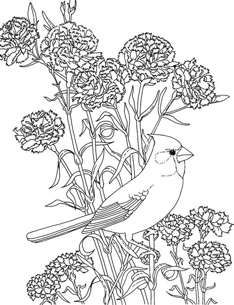 printable coloring pages of birds and flowers free printable coloring page ohio state bird and flower