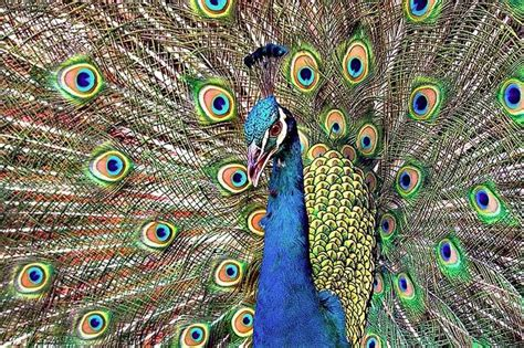 Jual Pakan Burung Balikpapan komunitas burung merak kalimantan plus kura kura brazil
