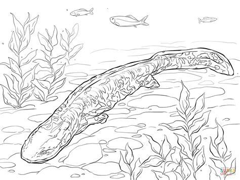tiger salamander coloring page hellbender coloring page free printable coloring pages