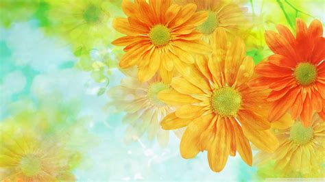 colorful flowers wallpaper 1920x1080 wallpoper