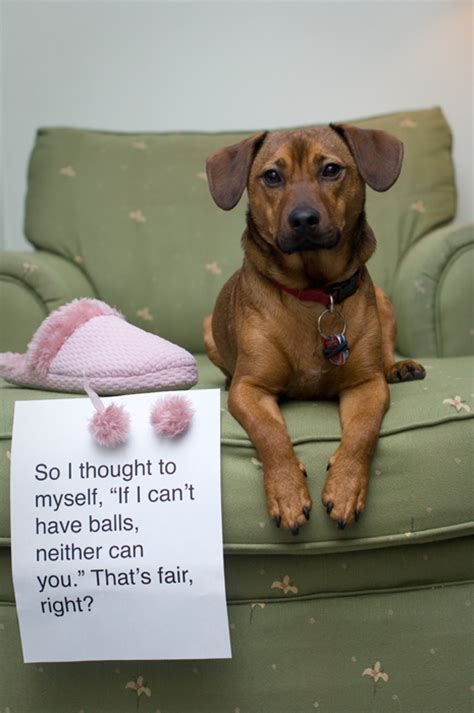 will having my dog neutered stop him peeing house shamed dog funny dog shaming pictures page 14