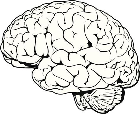 brain clipart free brain drawing cliparts free clip free