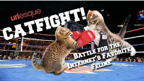 Cat Fight Meme - cat fight meme memes