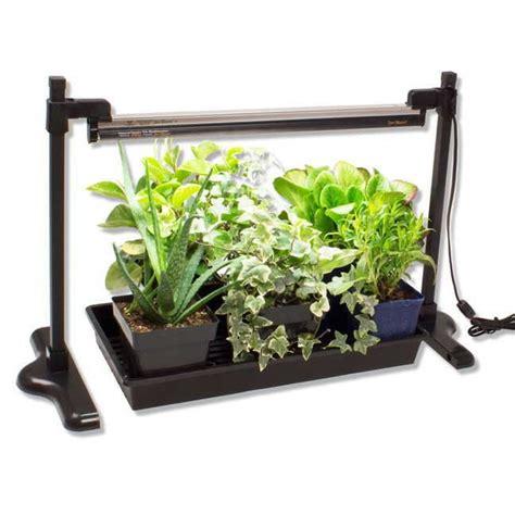 easy pieces grow lights  indoor plants gardenista