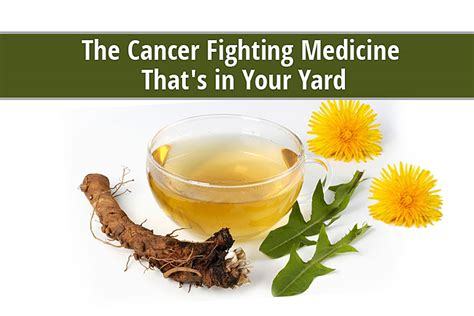 fighting cancer miracle cure for cancer the story of a writer who used to be a pharmaceutical chemical researcher has cured himself and helped his friends beat cancer for books the cancer fighting medicine that s growing in your yard