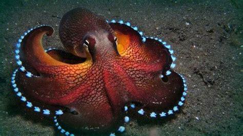 imagenes de animales moluscos impresionantes imagenes de animales invertebrados moluscos