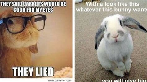 Cute Easter Meme - 26 bunny memes that are way too cute for your screen