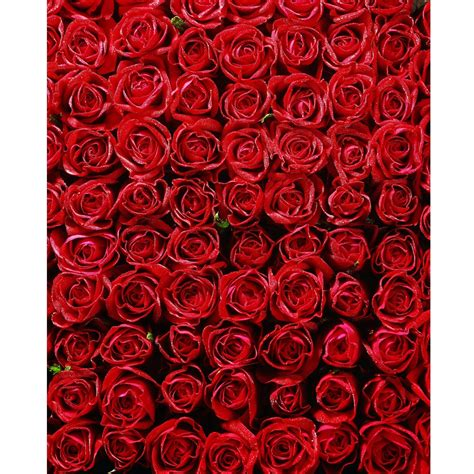 a bed of roses bed of roses printed backdrop backdrop express