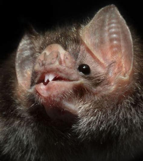 que son las imagenes figurativas realistas wikipedia criaturas de la noche ciencia el mundo