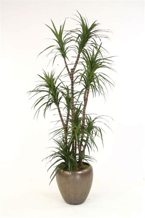 distinctive designs dracaena marginata tree in pot wayfair 621 best centerpieces and tablescapes images on pinterest