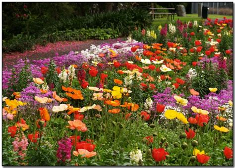 garden flower types flower shell s inventor on his need to spread seeds with a