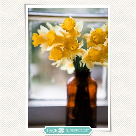 On The Windowsill Pretty Photo Post Daffodils On The Windowsill Burlington