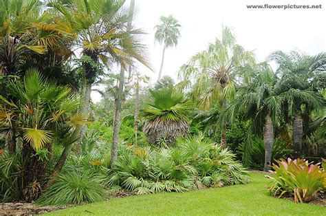 Tropical Botanical Garden Miami Fairchild Tropical Botanical Garden