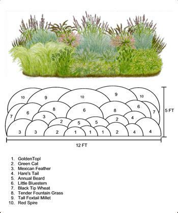House Plans With Front Porch Best 25 Ornamental Grasses Ideas On Pinterest