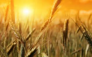 your harvest is coming prophetic light