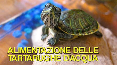 tartaruga d acqua alimentazione alimentazione delle tartarughe d acqua dott roberto