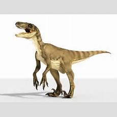 Velociraptor Games