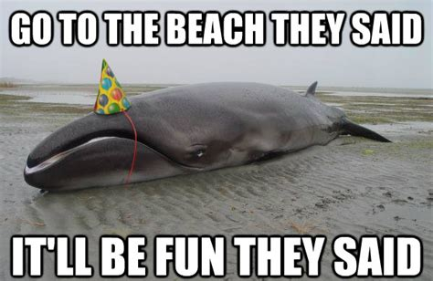 Whale Meme - disgruntled whale with a party hat advice animals know