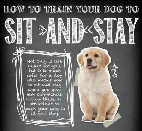 How To Teach Your To Stay The by Teach Your To Sit And Stay Best Guide