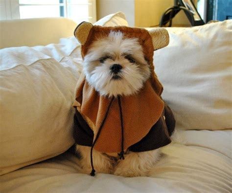 shih tzu wars 19 dogs dressed as your favorite quot wars quot characters