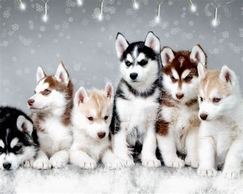 when are puppies fully grown cool puppy names puppies puppy