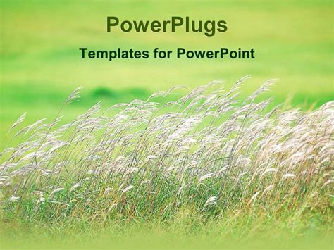 grass powerpoint template powerpoint template day light view of white plants on