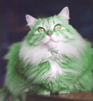 Green Cat s kitties green cats for st s day